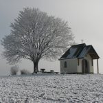 Rauhreif im Winter 3