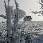 Rauhreif im Winter 2